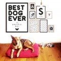 Plakat BEST DOG EVER